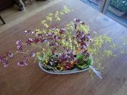 お正月オンシジュウムクロスした花